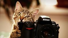 Cat chewing on a Nikon DSL, lol