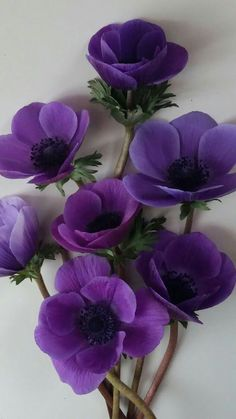 Great purple flowers, no species listed. Wonderful as a craft example. - Great purple flowers, no species listed. Wonderful as a craft example. Great purple flowers, no species listed. Wonderful as a craft example. Purple Wedding Flowers, Exotic Flowers, Amazing Flowers, Beautiful Flowers, Tropical Flowers, Purple Love, All Things Purple, Shades Of Purple, Anemone Flower