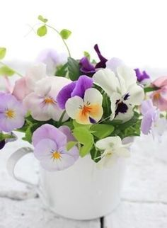 Pansies and Violas are so lovely. You just cannot go wrong.