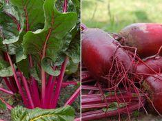Eggplant, Vegetables, Garden, Garten, Vegetable Recipes, Veggie Food, Gardens, Eggplants, Veggies