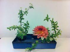 Love this arrangement My best work!!