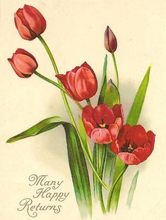 The Language of Flowers - Red Tulips = Undying Love Victorian Flowers, Vintage Flowers, Art Floral, Vintage Greeting Cards, Vintage Postcards, Flower Images, Flower Art, Cactus Flower, Botanical Art