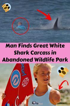 Man Finds Great White Shark Carcass in Abandoned Wildlife Park Shark Film, Mega Shark, Rare Birds, Wildlife Park, Deep Blue Sea, Great White Shark, Wtf Funny, Abandoned, Cute Babies
