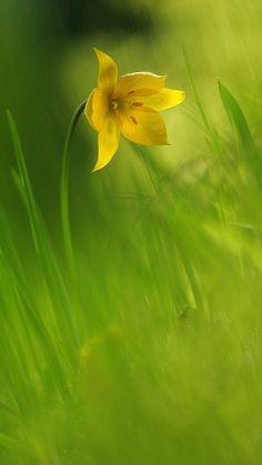 COTM | March 2016 | Yellow flower & Green grass. Summer colours.