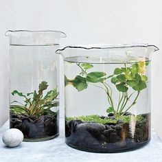 Get some underwater plants from a pet store, some large inexpensive vases and voila, you have an adorable (low maintenance! I really love this idea for a desk plant at work. For added fun, get a plant that will flower & add a fish? Indoor Pond, Indoor Water Garden, Garden Plants, Indoor Plants, Water Gardens, Small Gardens, Pond Plants, Shade Plants, Indoor Gardening