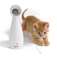 accesorios creativos para gatos 7
