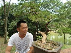 Wondrous 10 Best Lovely Bonsai Album Images Bonsai Art Ua Carving Wiring Cloud Oideiuggs Outletorg