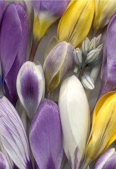 07807 Crocus etc 1001 | by horticultural art