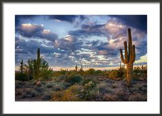 A Glorious Desert Morning  Framed Print By Saija  Lehtonen