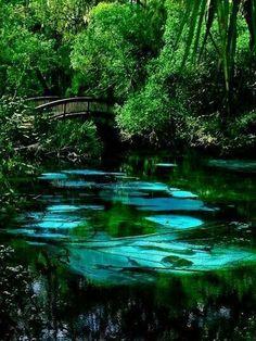 Fern Hammock Springs, North-Central, Florida