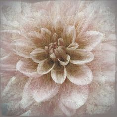 Dahlia Photograph,  Sepia Botanical Art Print, Shabby Chic Wall Decor, Flower Photography, Monochromatic by JudyStalus on Etsy https://www.etsy.com/listing/15002508/dahlia-photograph-sepia-botanical-art