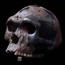 Se denomina Homo sapiens idaltu a especímenes fósiles (tres cráneos) encontrados en las proximidades de la localidad etíope de Herto durante el año 1997 por Tim White. Según este investigador, es muy probable que H. sapiens idaltu sea descendiente de Homo rhodesiensis. Estos fósiles han sido datados en unos 160.000 años A.P. Si es correcto que el Homo sapiens idaltu es una subespecie de la nuestra habrá que rescatar la antigua denominación de Homo sapiens sapiens para el hombre actual.