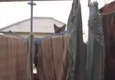 """Gym Motivation   Friday Funny   Cat's Outta The Bag! """"Whether you think you can or you can't.. you're right!"""" #gym motivation #motivationalquotes #gymfail # funnyvideos #cutecat"""