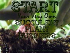 Succulent Plant Business; how to do it right