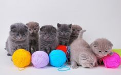 """""""How to Start a Knitting Group,"""" as explained by adorable kittens"""