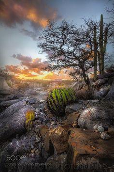 Moody Biznaga Sunset by LuisLyons via http://ift.tt/2ksm1Hb