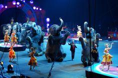 The One Simple Reason Why Performing Elephants Are Never Happy Elephants - The Dodo Nassau Coliseum, Happy Elephant, Animal Magic, Network For Good, Giraffe, Elephants, Stop Animal Cruelty, Make A Change, Large Animals