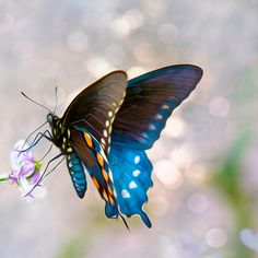 Butterfly Art Prints For Sale – Missouri Art Photography | Unfocussed PhotographyPhotos and Art