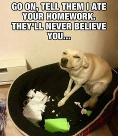 LOL what a naughty pup!