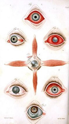 A synopsis of the diseases of the eye, and their treatment : to which are prefixed, a short anatomical description and a sketch of the physiology of that organ (1824).