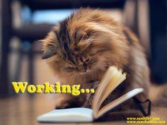 Working For You ! www.sunbilet.com www.sunshuttles.com 0090 242 324 8 324