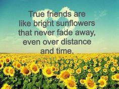 True friends are like bright sunflowers that never fade away, even over distance and time.