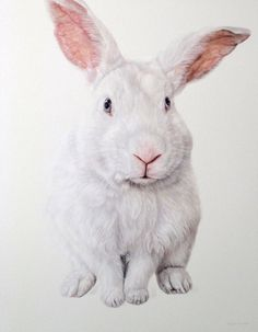 Lee Caroline - A World of Inspiration: The exquisite animal paintings of Ester Curini Rabbit Drawing, Rabbit Art, Cute Creatures, Beautiful Creatures, Lapin Art, Bunny Painting, Painting Art, Bunny Mask, White Rabbits