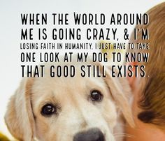 11 Inspirational Dog Quotes And Sayings-  65 Best Funny Quotes Life And Funny Sayings Dog Quotes - Download  52 Funny Dog Quotes With Images Good Morning Quote - Download  100 Funny Inspirational Pet Quotes And Sayings - Download  30 Inspiring Dog Quotes That Will Surely Melt Your Heart - Download  Dog Quotes 69 Of The Best Dog Quotes And Sayings - Download  Best Of Funny Dog Quotes Life Thenestofbooksreview - Download  Quotes About Losing A Dog To Remember Them In Pet Heaven - Download  10…