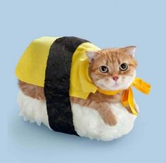 Cats as sushi: a bizarre Japanese ad series