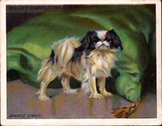 Dog Japanese Chin Spaniel Antique 1915 Trading Card...