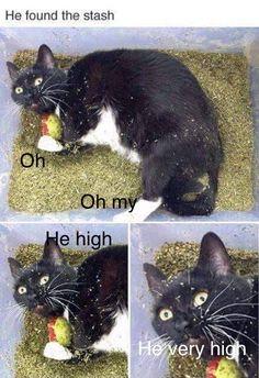 Funny Animal Jokes, Funny Cat Memes, Really Funny Memes, Funny Animal Pictures, Cute Funny Animals, Animal Memes, Cute Baby Animals, Funny Cute, Animals And Pets