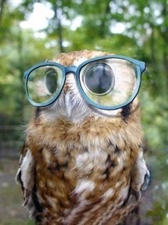 Owl with glasses :) -- This looks just like a picture taken of me in Davis. Weird!