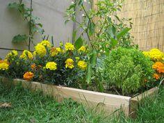 フレンチマリーゴールドと、スイカやきゅうりなどウリ科の植物も相性のいい組み合わせの代表格。防虫効果の高いマリーゴールドを一緒に植えることで、他の植物はすくすくと育つことができます。