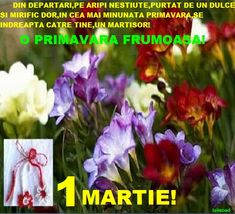 8 Martie, Plants, Hobby, Plant, Planets