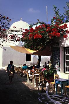 Hidden Greek - Folegandros Greek Isles, Bougainvillea, Santorini, Islands, Greece, Landscapes, Places To Visit, Sea, Table Decorations