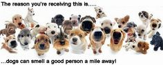 Dogs can Smell a Good Person a Mile Away