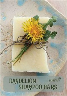 Dandelion Shampoo Bars Recipe - this sunny palm-free soap recipe is infused with dandelion flowers and scented with a cheerful blend of citrus essential oils. Directions are given for both hot process and cold process methods. - Crafts Are Fun Diy Shampoo, Homemade Shampoo, Shampoo Bar, Homemade Conditioner, Citrus Essential Oil, Essential Oils, Dandelion Recipes, Belleza Diy, Savon Soap