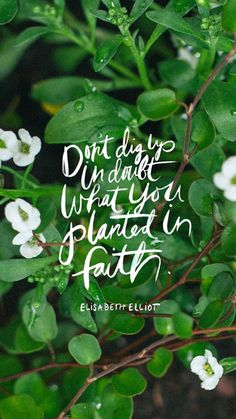 Elisabeth Elliot- Don't dig up in doubt what you planted in faith. june desktop + wallpaper // thorn + sparrow and kelli trontel Famous Inspirational Quotes, Great Quotes, Me Quotes, Famous Quotes, Wisdom Quotes, Inspiring Quotes, Bible Quotes, Christ Quotes, Godly Quotes