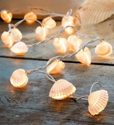 Diy Crafts Ideas : Seashell String Lights to Create Beach Ambiance on your Summer Porch! beachbliss