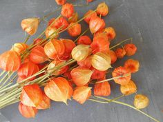 Bunch of Real Chinese Lanterns: Natural Fall Autumn by Swansdowne
