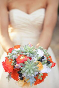 vibrant poppies and succulents