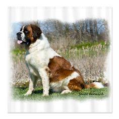 Saint Bernard, dog pet, portrait Shower Curtain