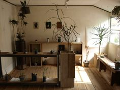 Love the rustic feel, natural light, plants. Use old crates or pallets to make shelves and tables.