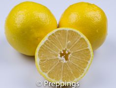 Sweet Lime - Search by flavors, find similar varieties and discover new uses for ingredients @ preppings.com