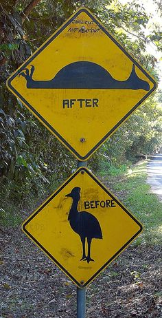 my favorite road sign ever. Right before a speed bump in Cassowary territory.... Far North Queensland, Australia