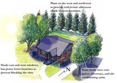 Image detail for -summer shade tree diagram