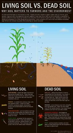 """""""LIVING SOIL vs. DEAD SOIL: Why Soil Matters to Farmers & the Environment; An entire world that feeds us [could be living] beneath our feet. Healthy soil [can] hold a wealth of organic[/living] matter made up of worms, [harmonious] bacteria, fungi & other microorganisms that work together to help crops thrive. When soil life is disturbed or unprotected[…]"""""""