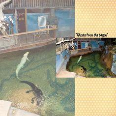 Dallas Zoo/Tina's 38th Birthday Album: Page 9