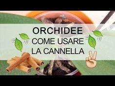 Orchidee - Come usare la cannella - YouTube