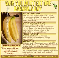 ☛ Do YOU know why you must eat at least one banana a day. It is the number one fruit with for world's leading athletes!  When compared to an apple, it has FOUR TIMES the protein, TWICE the carbohydrate, THREE TIMES the phosphorus, FIVE times the vitamin A and iron, and twice the other vitamins and minerals.   FOR A CANCER FIGHTING SMOOTHIE WITH BANANAS:  http://www.stepintomygreenworld.com/helathyliving/cancer-preventing-broccoli-smoothie/  ✒ Share | Like | Re-pin | Comment